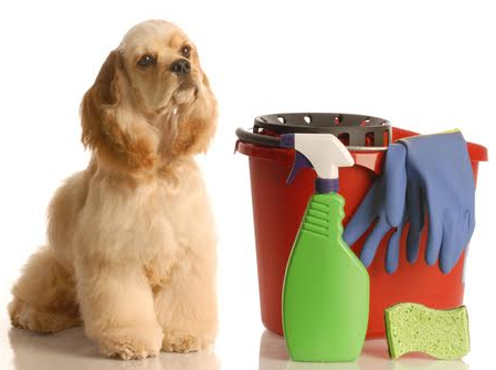 Charlotte Pet Friendly House Cleaning