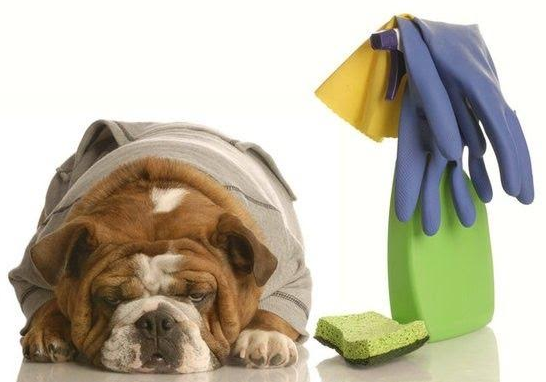 Pet Friendly House Cleaning Services Charlotte