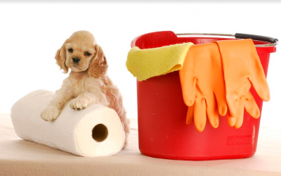 Pet Friendly House Cleaning Charlotte